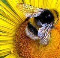 Что делают для нас насекомые